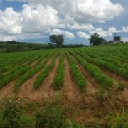 New A view of one of the proposed irrigation scheme sites rotated